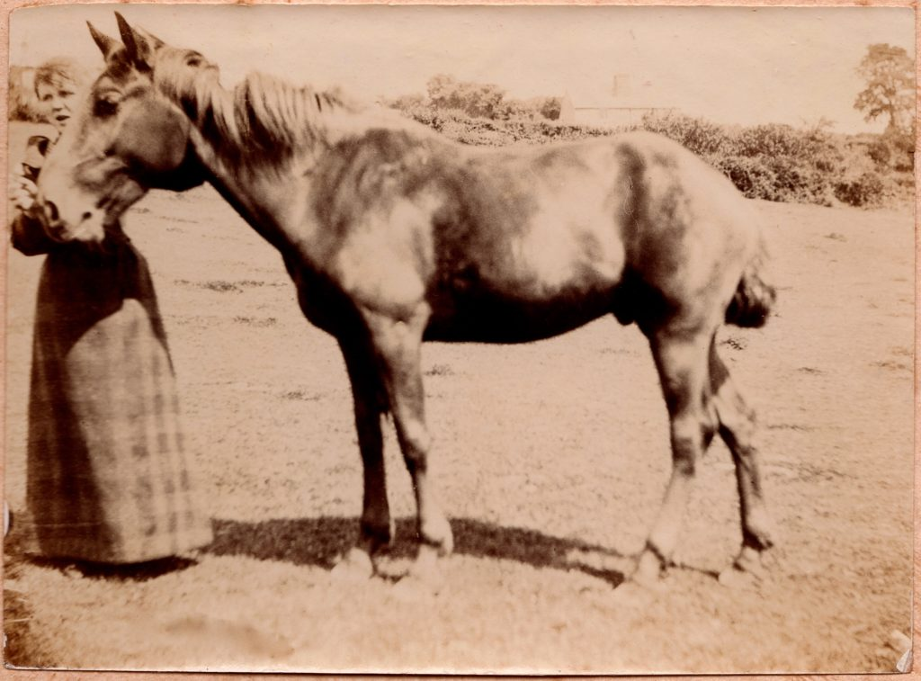 Delamore Lady with Horse