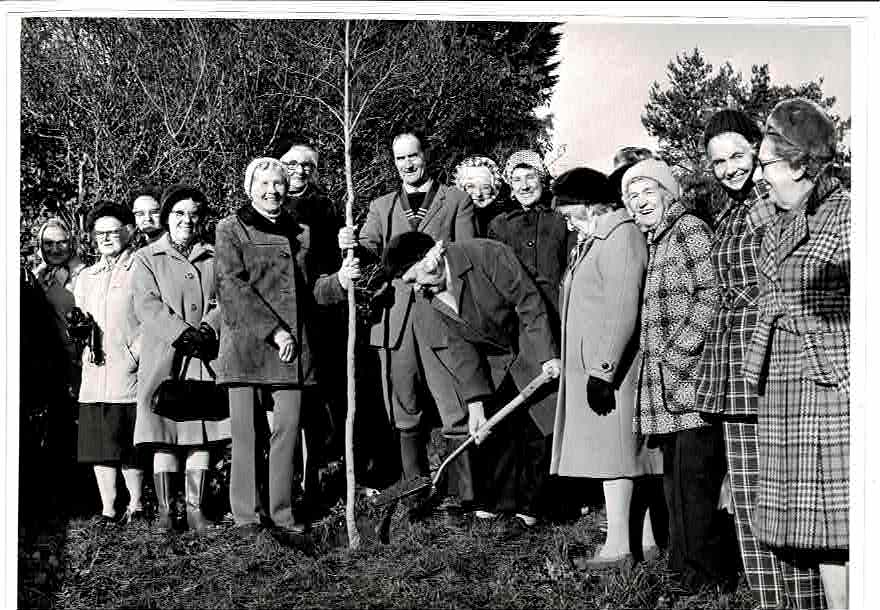 WI Tree planting at Clanage Cross 1975 1