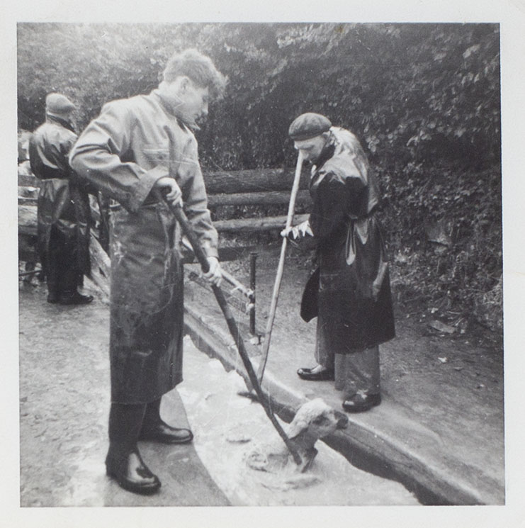 Photograph of Ernest and Ken Dawe sheep dipping at Ash Hill Farm, Bishopsteignton, inscribed in ink on reverse
