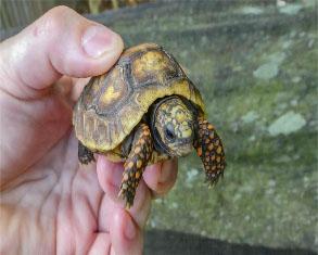 Tortoise at Cross Gate